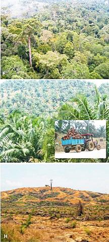 Palm_oil_forest_Sandra_Diaz3.jpg