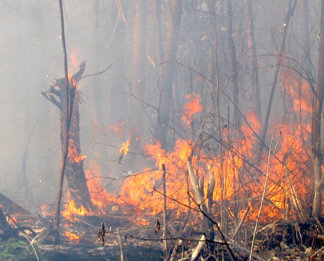 Peatswamp-forest-fire-in-Berbak-National-Park-SumatraMarcel-Silvius.jpg