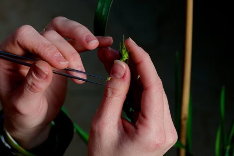 Plant-tech.jpg