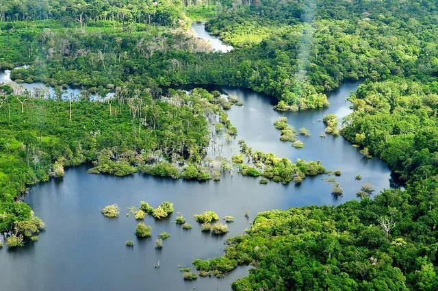 Rain-forests-near-Manaus-Brazil.jpg