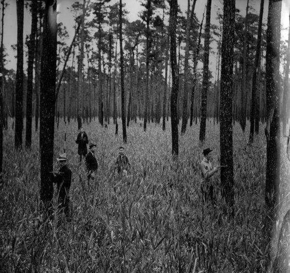 Reed-Forest-Apple-TCF-NCSU.jpg