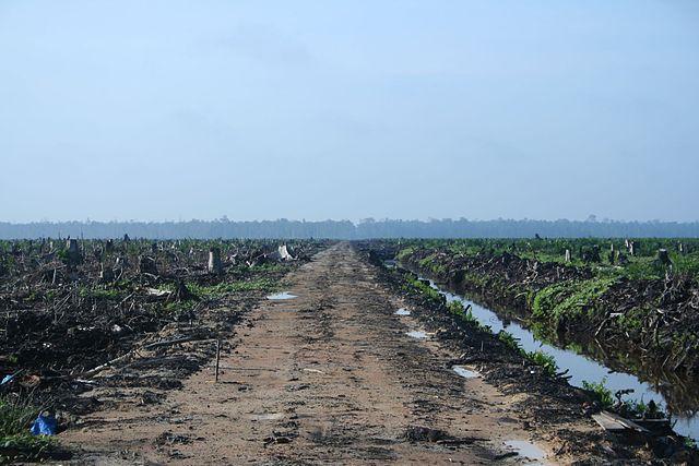 Riau_palm_oil_2007.jpg