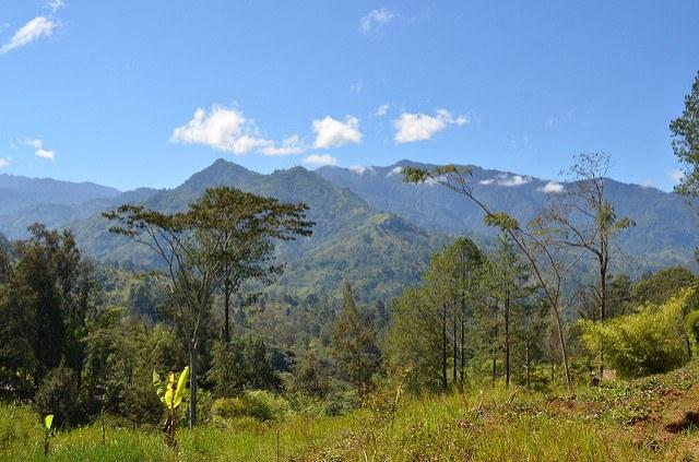 Rich-in-forests-Papua-New-Guinea-could-use-more-as-it-seeks-to-mitigate-climate-change.jpg