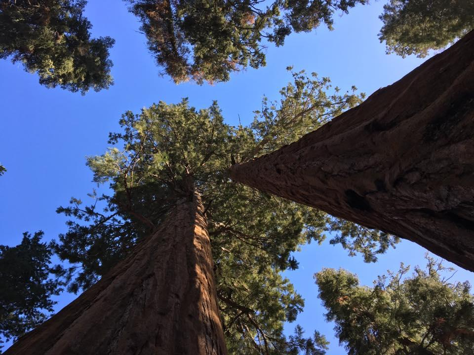Sequoia-National-Park-in-Californias-Sierras.jpg