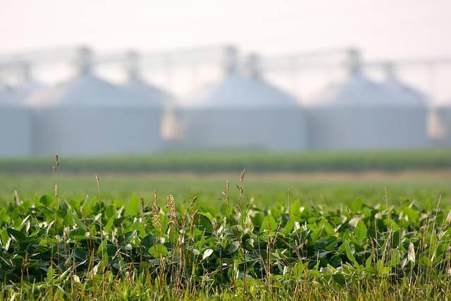 Soybeans-on-a-Central-Illinois-farm.jpg