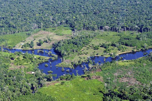The-Amazonian-rainforest-near-Manaus-Brazil.jpg