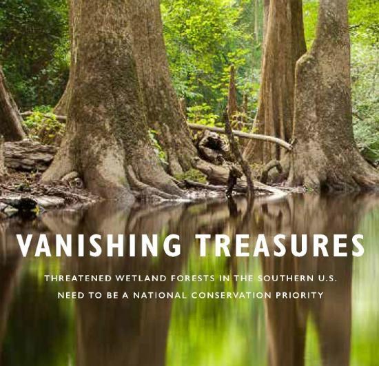 Vanishing-Treasures-Wetland-Forests-550.jpg