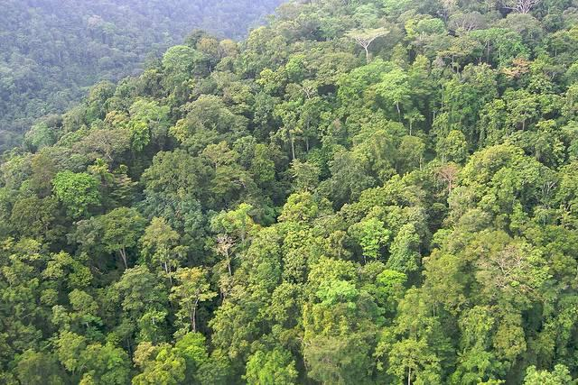 Virgin-rainforest-in-Kwerba-Papua-Indonesia.jpg