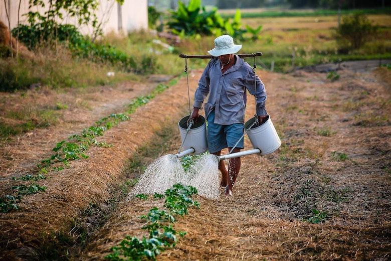 adult-agriculture-backyard-planting-162637-3p.jpg