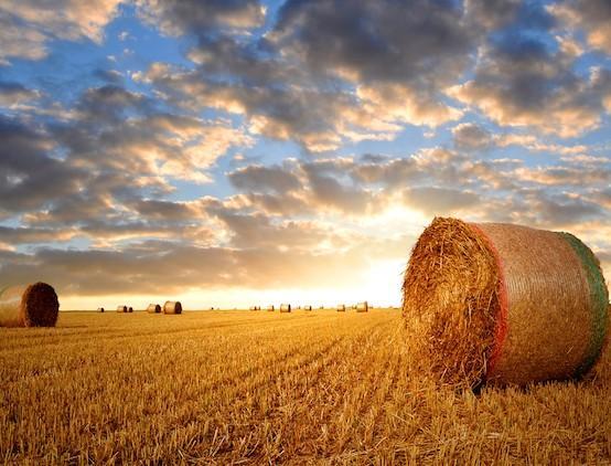 agricultureimage.jpg