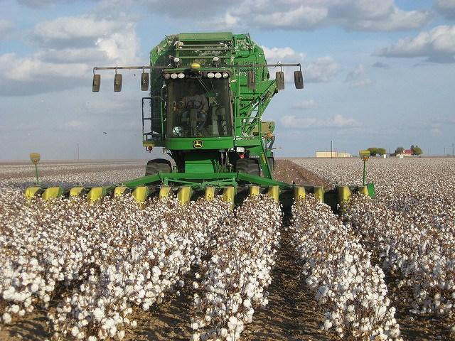 conventional_cotton_KimberlyVardeman.jpg