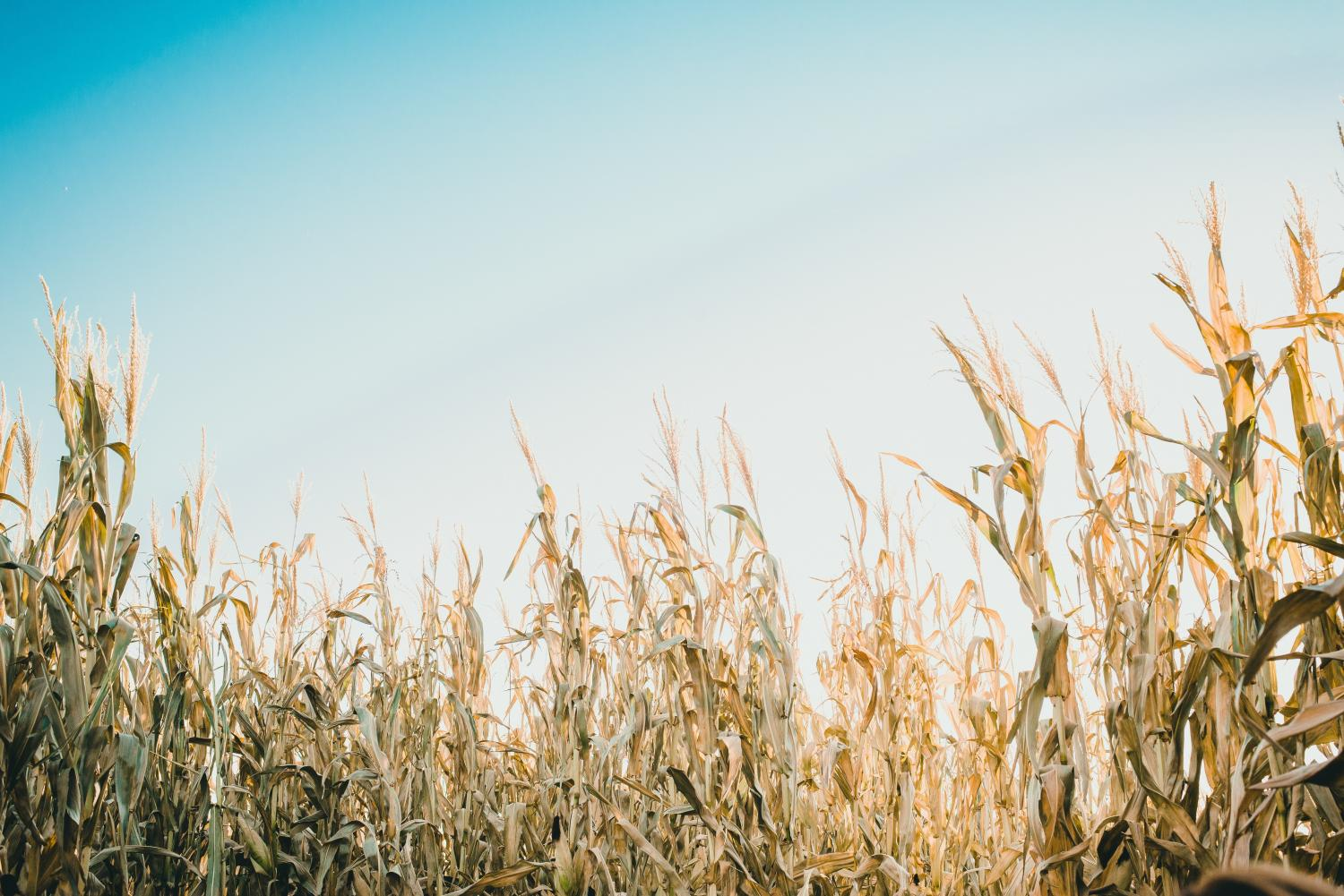 Americans are probably more familiar with genetically modified crops and foods than they realize, yet biotech companies have a long road ahead to overcome consumers' skepticism of this technology.