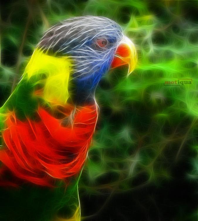 digital-parrot.jpg