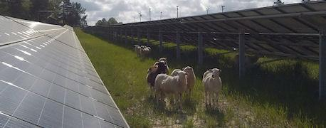 federal_funding_goes_rural_solar_renewable_energy_projects_1_635466571546819000.jpg