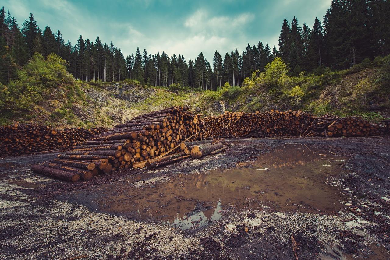 forestry-960806_1280.jpg