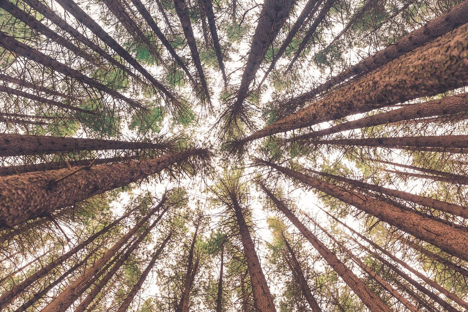 forests and sustainable forestry