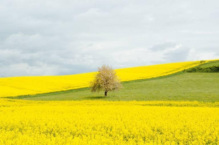 gabriel-garcia-marengo-agri-tree.jpg