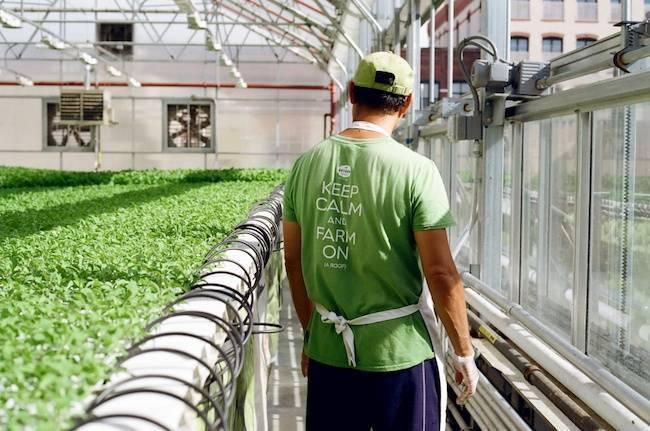 gotham-greens.jpg