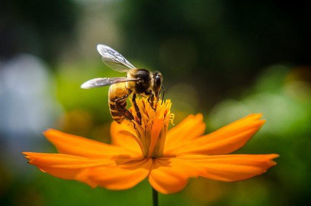 honey_bee_beekeepers_-Rakib_Hasan_Sumon.jpg