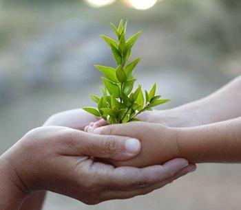 iStock_Hands-and-tree_000015647753XLarge.jpg