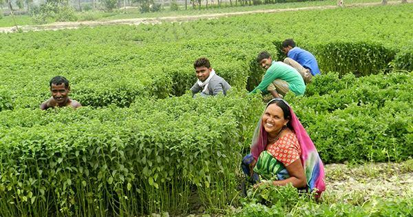 indian-mint-farmers.jpg