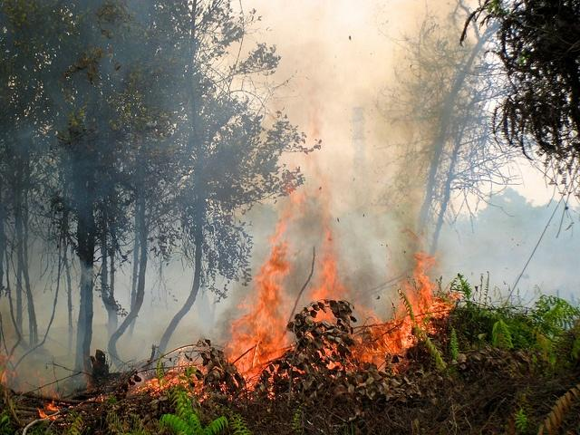 indonesia-forest-fires.jpg