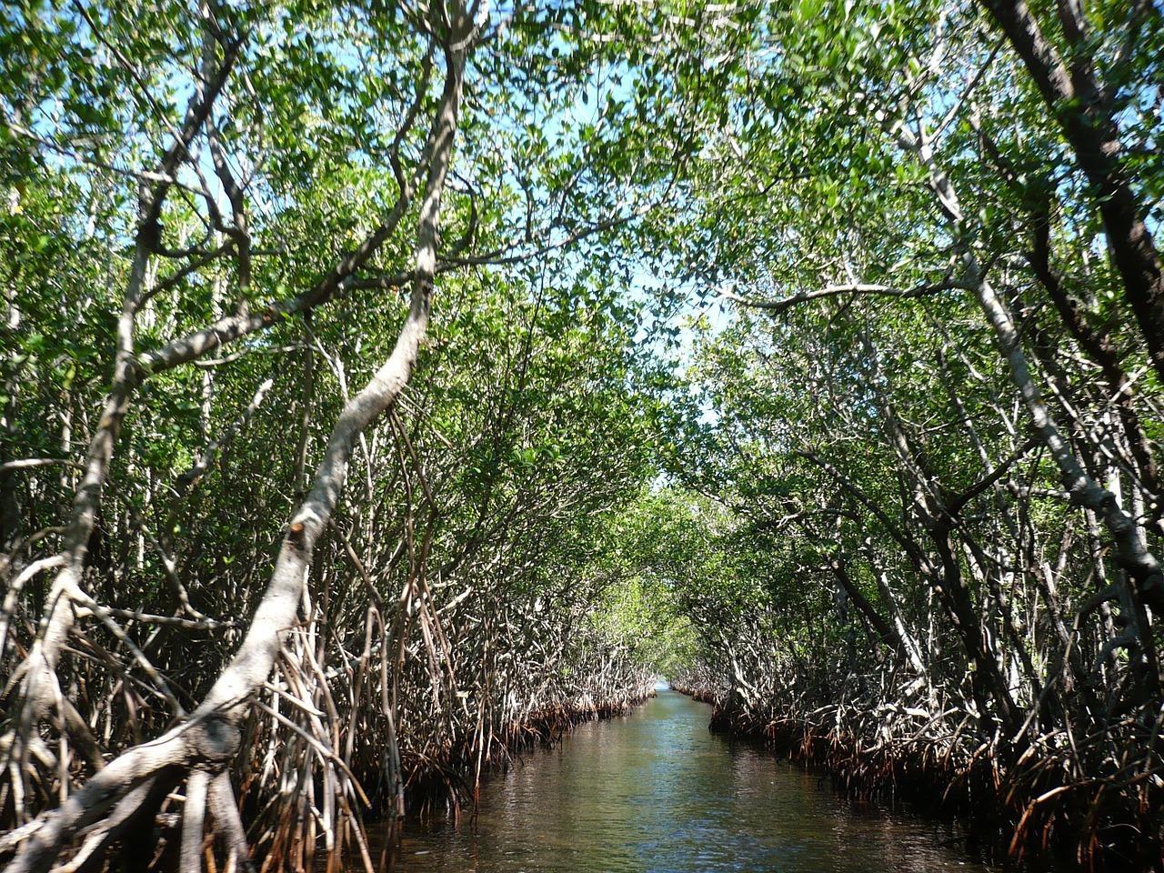 mangroves-105646_1280.jpg