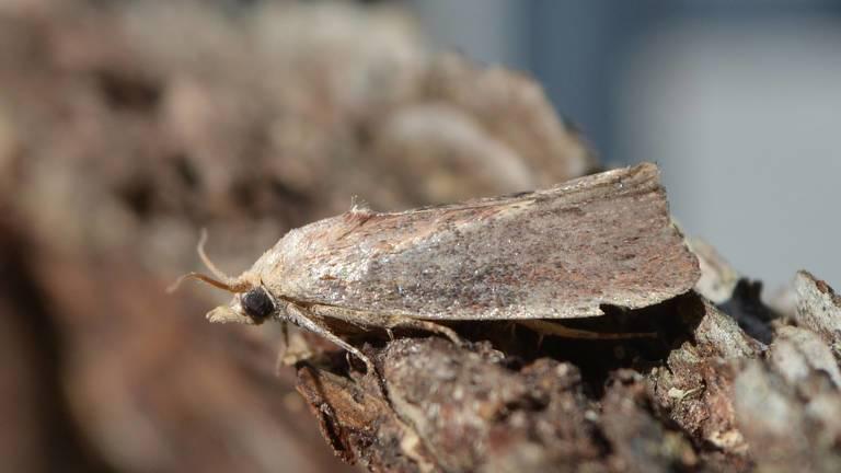 moth_catapillar_plastic_AndyReago-ChrissyMc.jpg