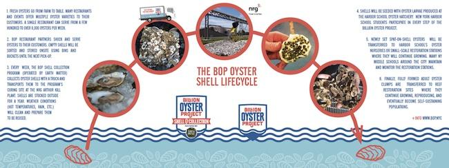 oyster-water-conservation-NYC-.jpg
