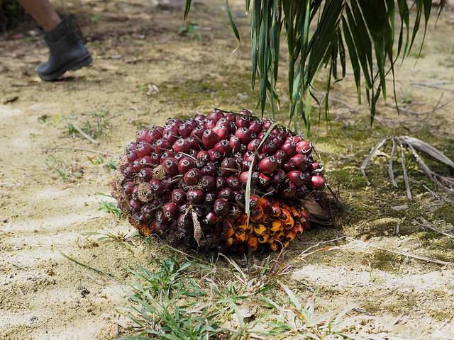 palm-oil-cluster.jpg