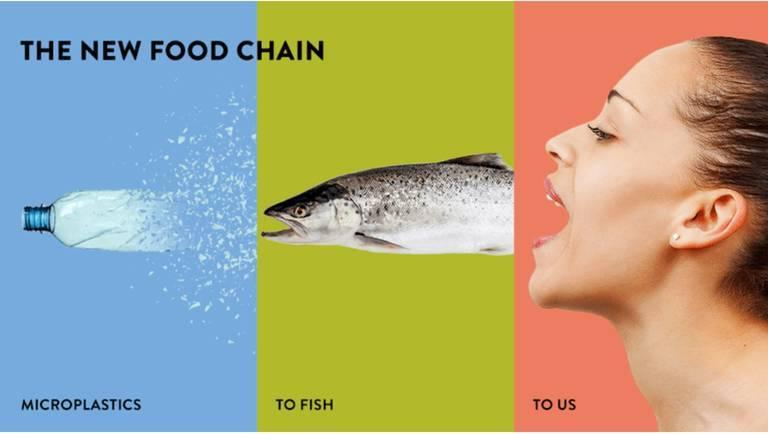 Plastic food chain infographic