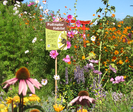 pollinator-habitat.png