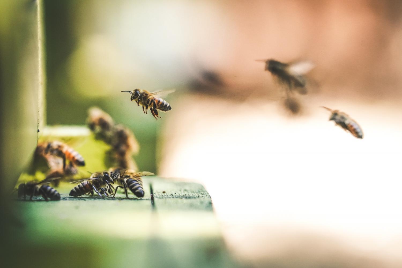 protect pollinator habitats