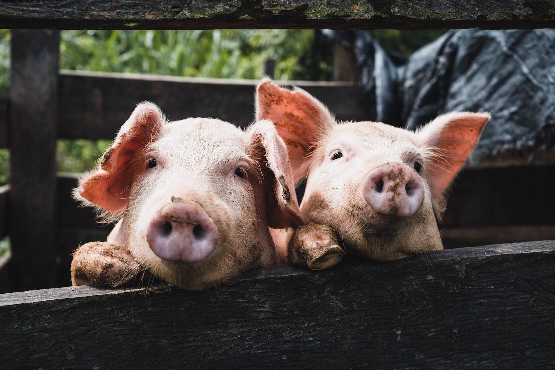 regenerative agriculture with livestock