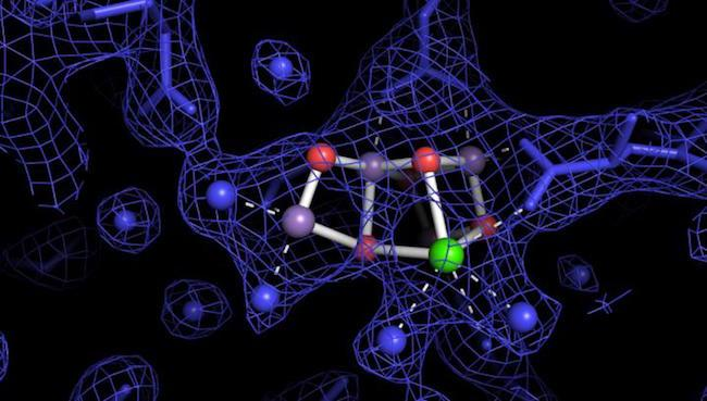renewable-hydrogen-photosynthesis.jpeg