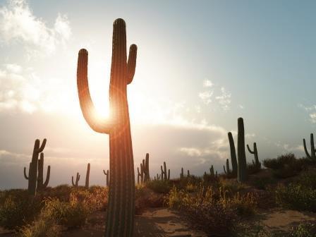 saguaro-sundown-16521451-markus-gann.jpg