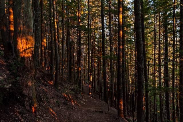sergei-akulich-sustainable-forestry.jpg