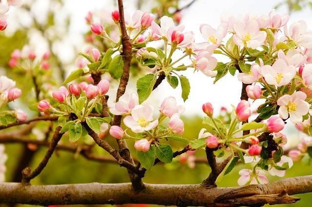 tree-1322681_640.jpg