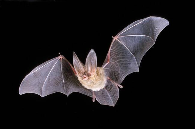 wind-power-wind-farms-bats.jpg